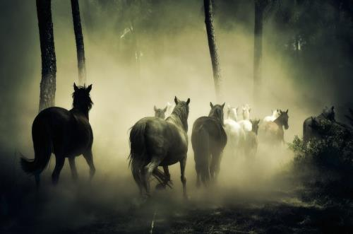 Group of unicorns or horseherd? It is up to your imagination, how you call it.