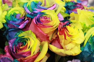 Unicorn  rainbow roses are an excellent gift for any unicorn lover.