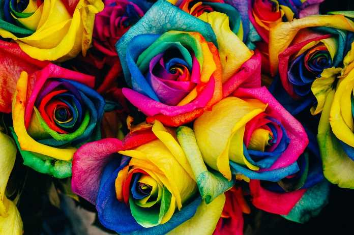 Multicolored rainbow unicorn roses